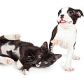 Playful Kitten And Puppy Playing by Susan Schmitz