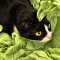 Playful Tuxedo Kitty In Green Tissue Paper by Kathy Clark