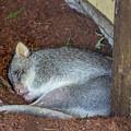 Playing Possum by Tania Read