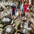 Playing With Giant Tortoises by Ashish Agarwal