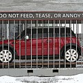 Please Do Not Feed Tease Or Annoy The Mini by Teresa Zieba