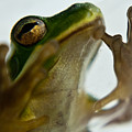 Please Not In A Frogs Eye by Douglas Barnett