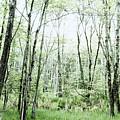 Pleasure Of Pathless Woods - Alt by Belinda Greb