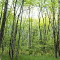 Pleasure Of Pathless Woods - Nat by Belinda Greb
