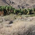 Plein Air Painter In The Desert by Frank DiMarco