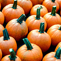 Plenty O' Pumpkins by Todd Klassy