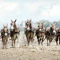 Plowing The Fields by Eleanor Bortnick