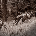 Plowman And Team Of Horses by Peter Hayward Photographer
