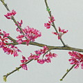 Plum Blossom by Glenda Zuckerman