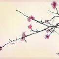 Plum Blossom by Eena Bo