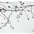 Plum Blossoms  by Eena Bo