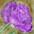 Plum Passion Rose by Alexis Grone