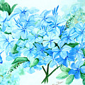Plumbago by Karin  Dawn Kelshall- Best