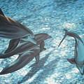 Pod Of Dolphins by Dan Remmel