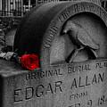 Poe by Wayne Higgs