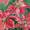 Poinsettia Magic by Deborah Ronglien