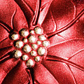 Poinsettia Abstract by Margaret Koc