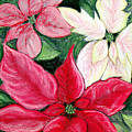 Poinsettia Pastel by Nancy Mueller
