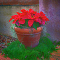 Poinsettia Pot by Jennifer Stackpole