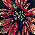 Poinsettia by Sarah Loft