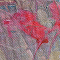 Poinsettia's In The Window by Donna Blackhall