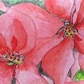 Poinsettias by Jan Watford