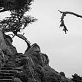 Point Lobos Pano I Bw by David Gordon