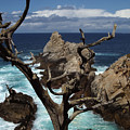 Point Lobos Rocks And Branches by Charlene Mitchell