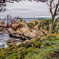 Point Lobos State Reserve by Donald Pash