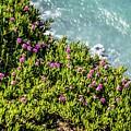 Point Reyes National Seashore Coast On Pacific Ocean by Alex Grichenko