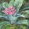 Poison Dart Frog On Bromeliad by Virginia Potter