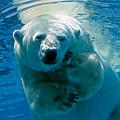 Polar Bear Contemplating Dinner by John Haldane