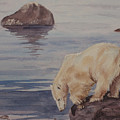 Polar Bear Fishing by Debbie Homewood