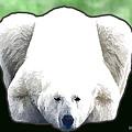 Polar Bear - Green by Marlene Watson
