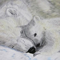 Polar Bears by Maris Sherwood