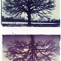 Polaroid Transfer Tree by Jane Linders
