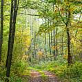 Polish Forest 2 by Marcin Rogozinski
