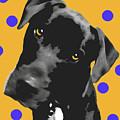 Polka Dot by Amanda Barcon