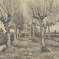 Pollard Birches Nuenen  March 1884 Vincent Van Gogh 1853  1890 by Artistic Panda