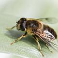 Pollen Dusted by Raelene Goddard