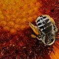 Pollen by Patrick  Short