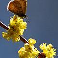 Pollen Pickup by Marle Nopardi