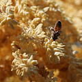 Pollinating Bee by Remmy Ar'emen