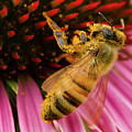 Pollinating by Jean Noren