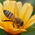Pollination 2 by Amy Fose