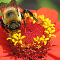 Pollination  by J M Farris Photography