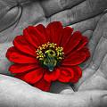 Pollination by Karl Huggins