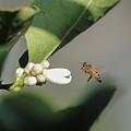 Pollination by Megan Martens