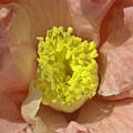 Pollination  by Rob Hawkins