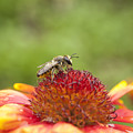 Pollinator And Flower by Thomas Young